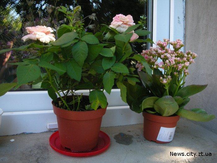 Дуже важливо мати зелені рослини